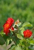 το φυτό αυξήθηκε στοκ εικόνα με δικαίωμα ελεύθερης χρήσης