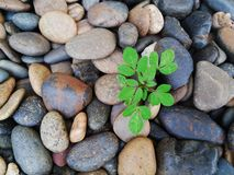 Το φυτό επιβίωσης μεγάλωσε μεταξύ των πετρών zen Στοκ Εικόνες
