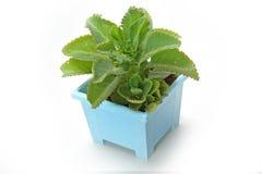 Το φυτό στοκ εικόνες
