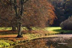 Το φυλλώδες δέντρο το πρωί και τη λίμνη Στοκ φωτογραφία με δικαίωμα ελεύθερης χρήσης