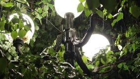 Το φως ενός λαμπτήρα οδών κατά τη διάρκεια μιας δυνατής βροχής απόθεμα βίντεο