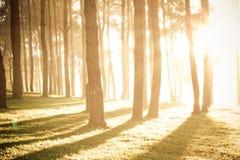Το φως λάμπει μέσω των δέντρων Στοκ Εικόνα