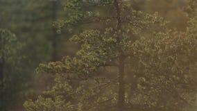 Το φως του ήλιου λάμπει μέσω των φύλλων των δέντρων απόθεμα βίντεο