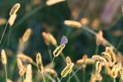 Το φως του ήλιου με με στοκ εικόνα με δικαίωμα ελεύθερης χρήσης