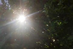 Το φως του ήλιου που κρυφοκοιτάζει μέσω των κλάδων Στοκ Φωτογραφία