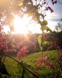 Το φως του ήλιου που πλαισιώνεται από τις εγκαταστάσεις στοκ φωτογραφίες