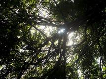 Το φως του ήλιου λάμπει με το δέντρο σκιαγραφιών Στοκ εικόνες με δικαίωμα ελεύθερης χρήσης