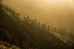 Το φως του ήλιου της φύσης Στοκ φωτογραφία με δικαίωμα ελεύθερης χρήσης