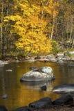 Το φωτεινό κίτρινο φύλλωμα απεικονίζει στον ποταμό Farmington, καντόνιο, Στοκ Εικόνες