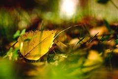 Το φωτεινό φύλλο φθινοπώρου, κλείνει επάνω Στοκ φωτογραφίες με δικαίωμα ελεύθερης χρήσης