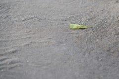Το φύλλο αφόρησε κάτω το καλοκαίρι παραλιών πατωμάτων άμμου Στοκ φωτογραφίες με δικαίωμα ελεύθερης χρήσης