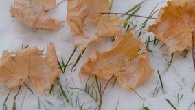 Το φύλλο σφενδάμου βρίσκεται στο χιόνι απόθεμα βίντεο