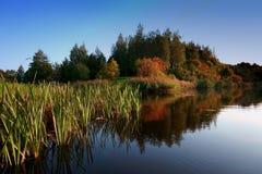 Το φύλλωμα φθινοπώρου πετά την αντανάκλαση στα ήρεμα νερά στοκ εικόνα