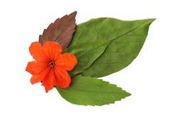 Το φύλλο απομονώνει, σύσταση του πράσινου φύλλου στοκ εικόνες με δικαίωμα ελεύθερης χρήσης
