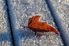 Το φύλλο στον παγετό Στοκ φωτογραφία με δικαίωμα ελεύθερης χρήσης