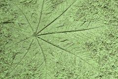 Το φύλλο σφραγίδων στο υπόβαθρο πατωμάτων τσιμέντου, αλεσμένη σύσταση backg Στοκ φωτογραφίες με δικαίωμα ελεύθερης χρήσης