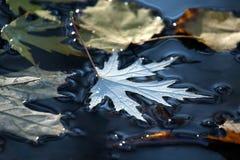 Το φύλλο φθινοπώρου βρίσκεται σε μια λακκούβα στοκ εικόνα με δικαίωμα ελεύθερης χρήσης