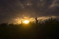 Το φύλλο φωτογραφιών υποβάθρου φύσης στενό σε επάνω ηλιοβασιλέματος στις θερμές χρωμάτων μακρο bokeh στενές επάνω ακτίνες ήλιων σ Στοκ εικόνα με δικαίωμα ελεύθερης χρήσης