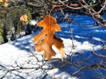 Το φύλλο Στοκ φωτογραφίες με δικαίωμα ελεύθερης χρήσης