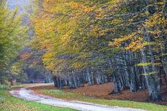 Το φύλλωμα το φθινόπωρο σε Pian delle Macinare, τοποθετεί Cucco, Apennine Στοκ φωτογραφίες με δικαίωμα ελεύθερης χρήσης