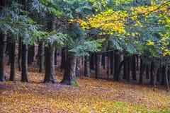 Το φύλλωμα το φθινόπωρο σε Pian delle Macinare, τοποθετεί Cucco, Apennine Στοκ φωτογραφία με δικαίωμα ελεύθερης χρήσης