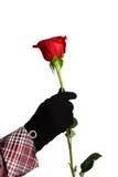 το χέρι ένα κόκκινο αυξήθηκε Στοκ φωτογραφία με δικαίωμα ελεύθερης χρήσης