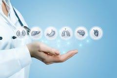 Το χέρι γιατρών ` s παρουσιάζει εσωτερικά όργανα Στοκ Φωτογραφίες
