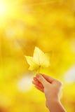 Το χέρι γυναικών κρατά το κίτρινο φύλλο σφενδάμου σε ένα κίτρινο sunn φθινοπώρου στοκ εικόνα με δικαίωμα ελεύθερης χρήσης