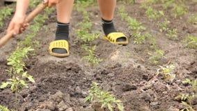 Το χέρι γυναικών με τη σκαπάνη λειτουργεί το χώμα στο φυτικό κήπο, με τα σπορόφυτα ντοματών απόθεμα βίντεο