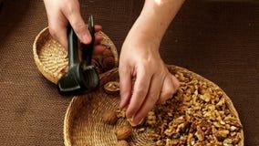 Το χέρι γυναικών ραγίζει ένα ξύλο καρυδιάς με τον καρυοθραύστης μετάλλων απόθεμα βίντεο