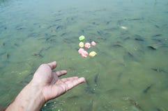 Το χέρι θαμπάδων ταΐζει στα ψάρια Στοκ εικόνα με δικαίωμα ελεύθερης χρήσης