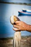 Το χέρι και το χταπόδι Στοκ εικόνες με δικαίωμα ελεύθερης χρήσης