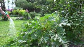 το χέρι κηπουρών κήπων εξοπλισμού κρατά το πότισμα φυτικού ύδατος ψεκαστήρων ψεκαστήρων φυτών άρδευσης μανικών 4K απόθεμα βίντεο