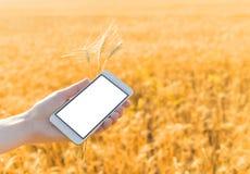 Το χέρι κρατά ένα smartphone με μια άσπρη οθόνη στο κλίμα στοκ φωτογραφίες