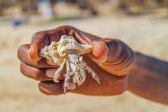 Το χέρι κρατά το καβούρι σε ένα ηλιόλουστο νησί στη μέση της Ερυθράς Θάλασσας στοκ εικόνες με δικαίωμα ελεύθερης χρήσης