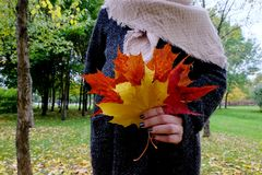 Το χέρι κρατά τα κίτρινα, χρυσά και κόκκινα φύλλα φθινοπώρου Στοκ Εικόνες