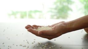 Το χέρι κρατά τα σιτάρια του ρυζιού απόθεμα βίντεο