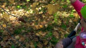 Το χέρι λίγου παιδιού αγγίζει ήπια έναν κλάδο δέντρων απόθεμα βίντεο