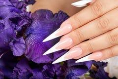 Το χέρι με τα μακροχρόνια τεχνητά γαλλικά τα καρφιά και ένα πορφυρό λουλούδι της Iris στοκ εικόνες