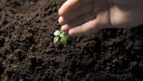 Σπορά των σπόρων απόθεμα βίντεο