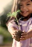Το χέρι μικρών κοριτσιών που κρατά το νέο δέντρο για προετοιμάζει τις εγκαταστάσεις στο έδαφος Στοκ Φωτογραφία