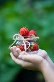 Το χέρι παιδιών ` s κρατά φράουλες τις μικρές γυαλιού βάζων Στοκ φωτογραφίες με δικαίωμα ελεύθερης χρήσης