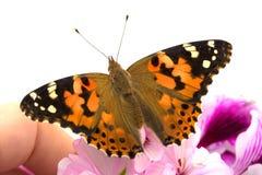 το χέρι πεταλούδων κάθετ&alpha Στοκ Φωτογραφία