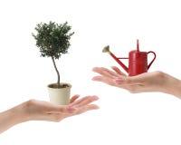το χέρι που κρατά το μικρό κόκκινο πότισμα μπορεί και δέντρο Στοκ Εικόνα