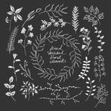 Το χέρι σκιαγράφησε τα floral στοιχεία Στοκ Εικόνα