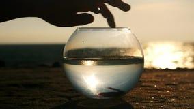 Το χέρι σκιαγραφιών θερινού ηλιοβασιλέματος αγγίζει ήπια fishbowl με τα ψάρια στην παραλία απόθεμα βίντεο