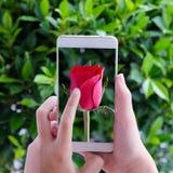 Το χέρι σχετικά με το έξυπνο τηλέφωνο με το κόκκινο αυξήθηκε στο υπόβαθρο οθόνης Στοκ εικόνες με δικαίωμα ελεύθερης χρήσης