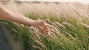 Το χέρι της γυναίκας αγγίζει τη γεωργία εγκαταστάσεων απόθεμα βίντεο