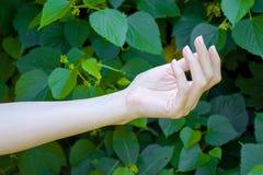 Το χέρι του νέου κοριτσιού σε πράσινο βγάζει φύλλα το υπόβαθρο Στοκ φωτογραφία με δικαίωμα ελεύθερης χρήσης