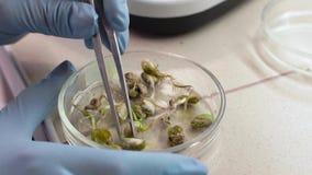 Το χέρι του τεχνικού εργαστηρίων παίρνει εγκαταστάσεις με τα τσιμπιδάκια για τη δοκιμή φιλμ μικρού μήκους